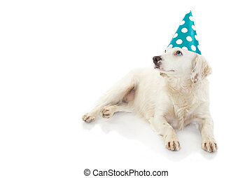 CUTE DOG WITH COLORED EYES CELEBRATING A BIRTHDAY OR NEW YEAR PARTY, WEARING A BLUE POLKA DOT HAT. LOOKING UP. ISOLATED SHOT AGAINST WHITE BACKGROUND.