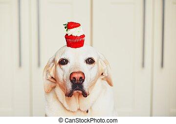 Cute dog with cupcake