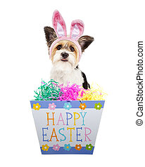 Cute Dog With Happy Easter Box