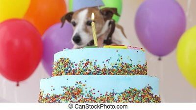 Cute dog with party hat and birthday cake - Cute jack...