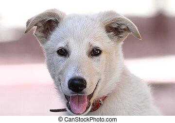 cute doggy portrait