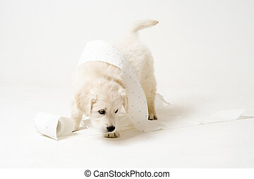 cute doggy with toilet paper