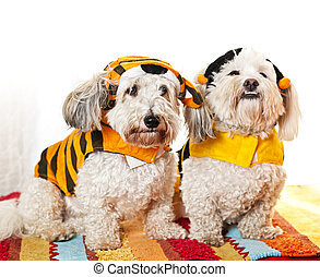 Cute dogs in costumes