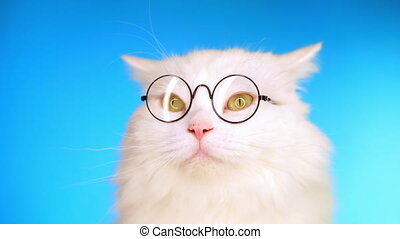 Cute domestic pet in round transparent glasses. Furry cat on...