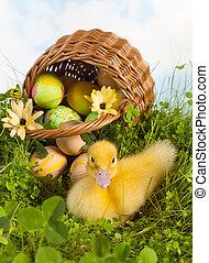 cute, duckling, com, ovos páscoa