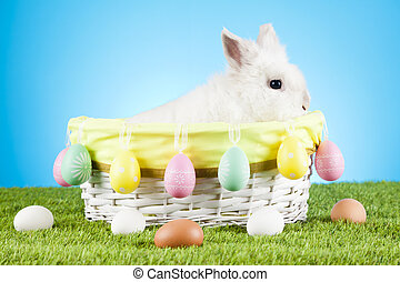 Cute Easter Bunny sitting in a wicker basket decorated with Easter eggs