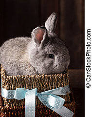cute easter bunny with colored eggs
