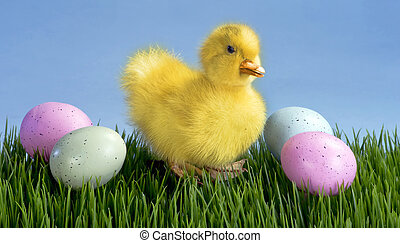 Cute Easter Duck.