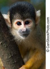 cute, egern abe