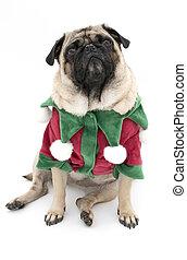 Cute Elf Pug