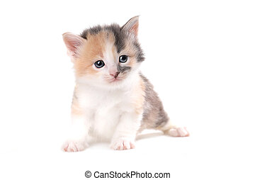 Expressive Kitten Isolated on a White Background