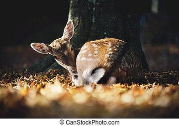 Cute Fallow Deer Lying under the Tree in Falling Leaves. Autumnal Atmosphere.
