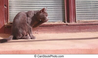 Cute feral cat cleaning her fur in the street on setting sun