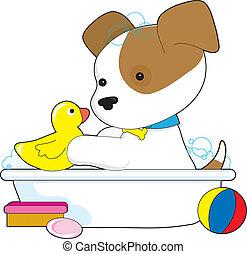 cute, filhote cachorro, banho