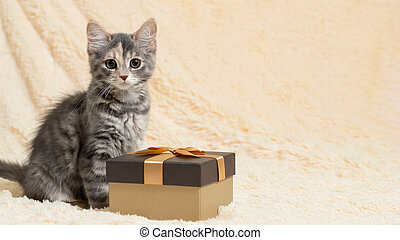 Cute fluffy gray kitten sitting on a beige fur plaid next to a gift box, copy space