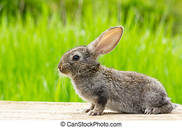 Cute fluffy grey rabbit with ears on a natural green background
