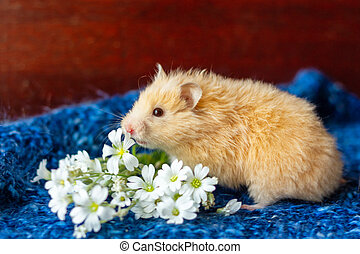 cute fluffy hamster with flowers on blue background