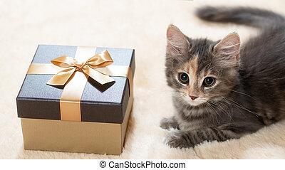 Cute fluffy kitten lies on a cream fur plaid next to a golden gift box