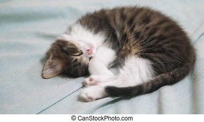 Cute fluffy kitten sleeping on white bed. cat slow motion...