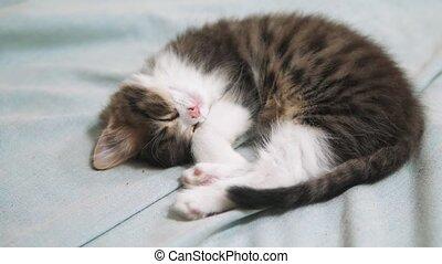 Cute fluffy kitten sleeping on white bed. cat slow motion...