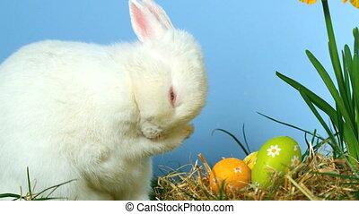 Cute fluffy rabbit scratching its n