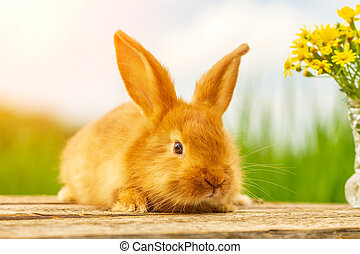 cute fluffy red rabbit on nature background bouquet of yellow flowers
