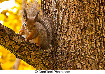 cute fluffy squirrel sits watching on a tree branch against a background of an autumnal forest close-up