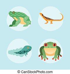 cute four amphibians