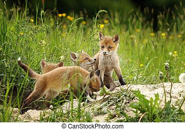 cute fox brothers  the burrow