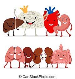 cute, fundo, isolado, vetorial, human, branca, órgãos, interno