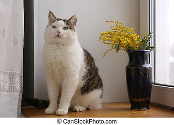 cute funny cat close up portrait with mimose flowers