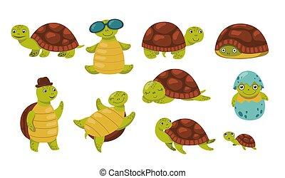 Cute funny turtle set