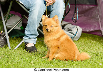 Cute furry dog - One cute brown furry dog in front of...