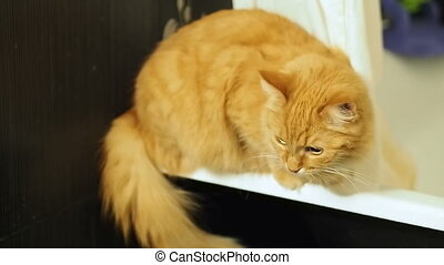 Cute ginger cat hoping down from tub. Fluffy pet looking...