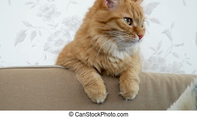 Cute ginger cat is sitting on couch. Cozy home. Fluffy pet...