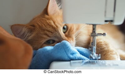 Cute ginger cat is sleeping behind sewing machine. Fluffy...
