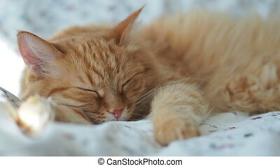 Cute ginger cat is sleeping in bed. Fluffy pet dozing. Cozy...