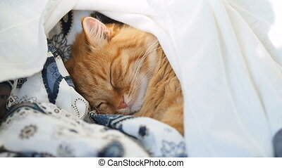 Cute ginger cat is sleeping in bed. Fluffy pet dozing under...