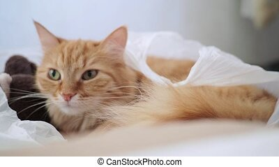 Cute ginger cat lying in plastic bag with plush toy bear. Fluffy pet is dozing. Cozy home background with kitty hiding in toys from noisy baby.