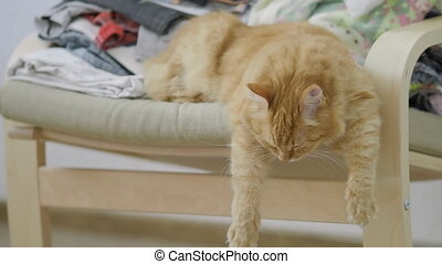 Cute ginger cat lying on chair with piled clothes. Fluffy pet dozing, dangling paws down. Cozy home. Flat profile.