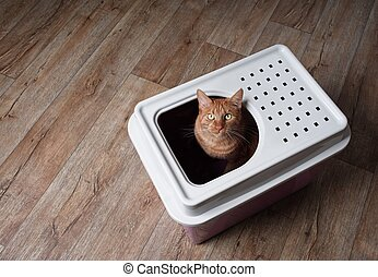 Cute ginger cat sitting in a top-entry litter box and looking curious up to the camera. High angle view with copy space.