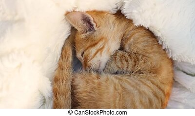 Ginger striped kitten wakes up on a white fluffy blanket. Hygge and cozy morning concept