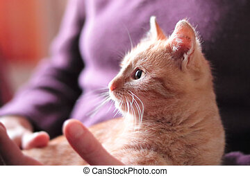 cute ginger kitten in the arms of a woman