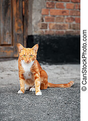 Cute ginger kitten sitting near red brick wall of an old house and looking at the camera