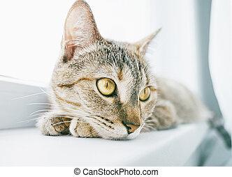 Cute ginger tabby cat lying on windowsill, close-up of muzzle.