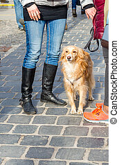 Golden Retriever dog on a leash with owner on the street. Space for text