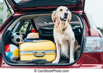 dog sitting in car trunk with luggage