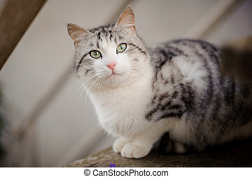 Cute gray and white cat with the light green eyes sitting on the wooden board and looking up