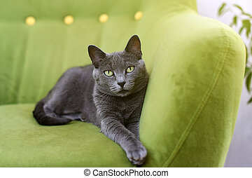 Cute gray cat laying stretched out, relaxing on the sofa....