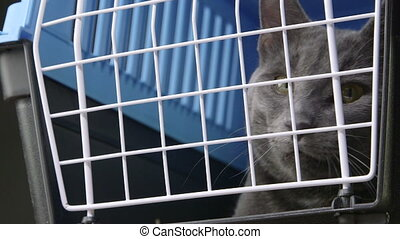 pet cage carrier - Cute gray cat sitting inside pet cage...